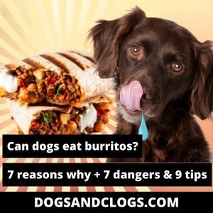 Can Dogs Eat Burritos