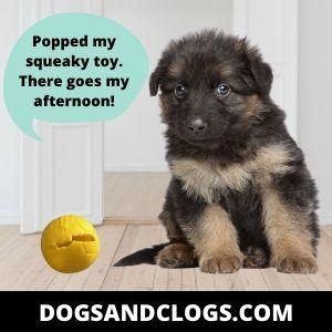 Cute German Shepherd Memes