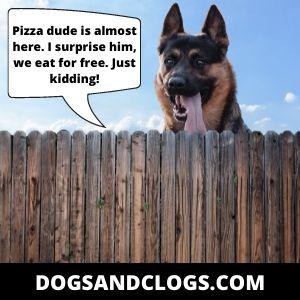 Dog German Shepherd Jokes