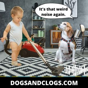 Familiarize Your Dog With Sounds