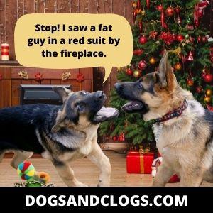 Fat German Shepherd Meme