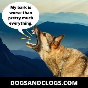 German Shepherd Barking Meme