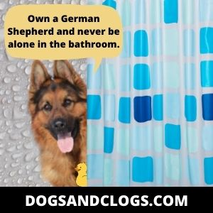 German Shepherd Bathroom Meme