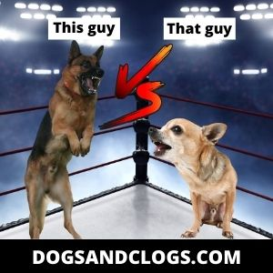 German Shepherd Chihuahua Joke