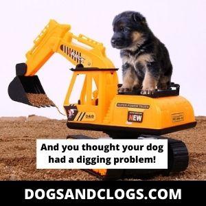 German Shepherd Digging Meme