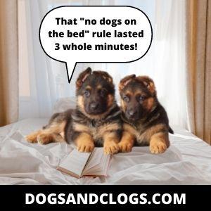 German Shepherd Dog Memes
