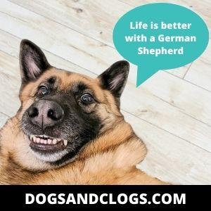 German Shepherd Funny Quotes