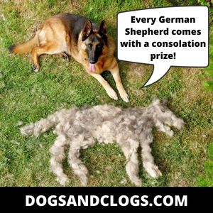 German Shepherd Hair Meme