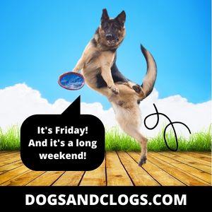 German Shepherd It's Friday Meme