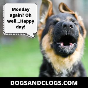 German Shepherd Monday Meme