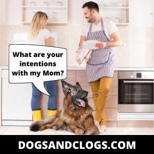 German Shepherd Protection Memes