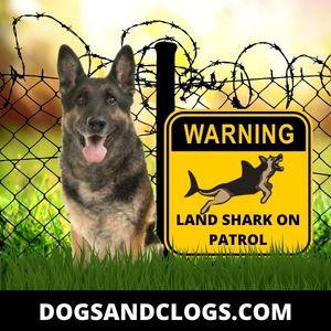 German Shepherd Shark Meme