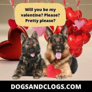 German Shepherd Valentine Meme