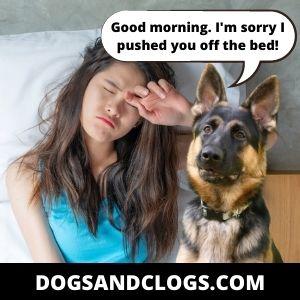 Good Morning German Shepherd Meme