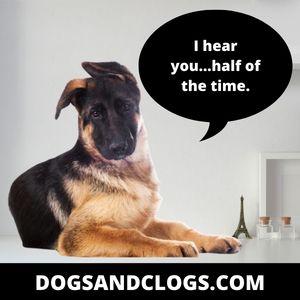 Half Listening German Shepherd Meme