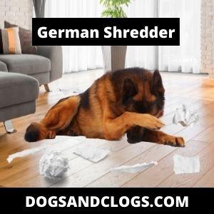 Hilarious German Shepherd Memes