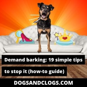 How Do You Stop A Dog From Demand Barking