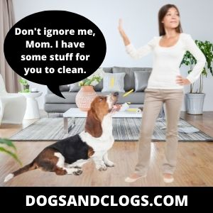 Ignore Your Dog When Barking