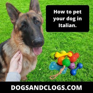 Italian German Shepherd Meme