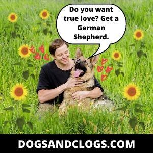 Love German Shepherd Memes