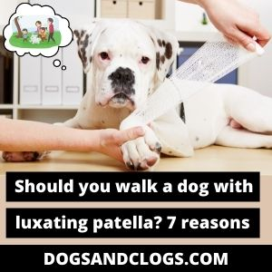 Should You Walk A Dog With A Luxating Patella