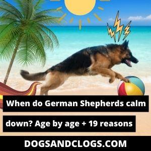 When Do German Shepherds Calm Down
