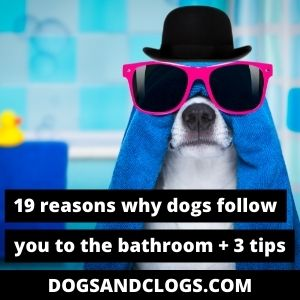 Why Do Dogs Follow You To The Bathroom