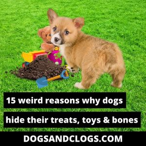 Why Does My Dog Hide His Treats Toys And Bones