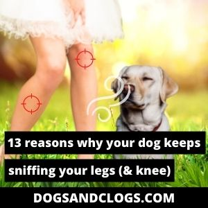 Why Does My Dog Keep Sniffing My Legs
