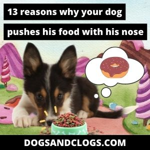 Why Does My Dog Push His Food With His Nose