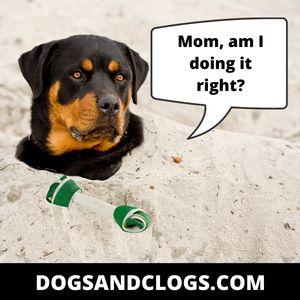 You've Been Encouraging Your Dog's Behavior