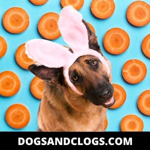 Add Carrots To Your Dog's Meals
