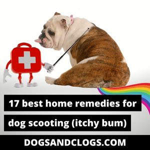 Home Remedies For Dog Scooting
