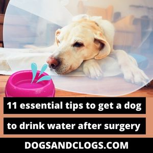 How To Get A Dog Drink Water After Surgery
