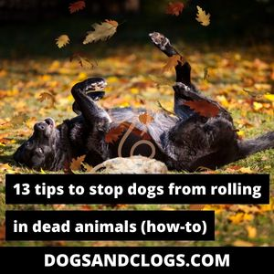How To Stop Dogs From Rolling In Dead Animals