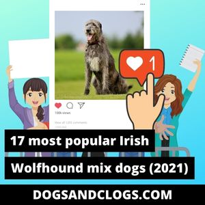 Irish Wolfhound Mix
