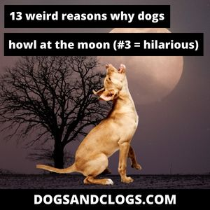 Why Do Dogs Howl At The Moon