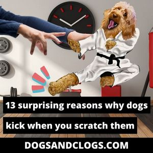 Why Do Dogs Kick When You Scratch Them