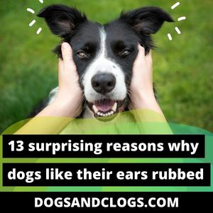 Why Do Dogs Like Their Ears Rubbed