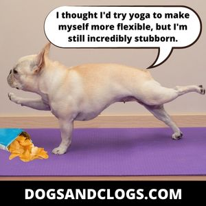 Your Dog Is Being Stubborn