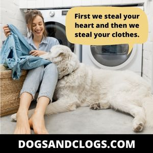 Your Dog Takes Your Clothes When You Leave To Get Your Attention
